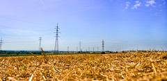 Golden Field (Thomas TRENZ) Tags: field landscape iso100 austria nikon feld straw landschaft stroh f63 22mm 11600 nikon18553556 sterreich nikond5100 thomastrenz