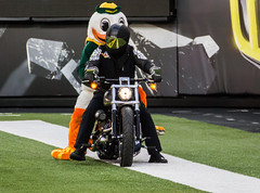 Ducks vs South Dakota-623 (boudreaudavid83) Tags: college oregon football south ducks vs dakota 2014