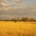 African safari, Aug 2014 - 018