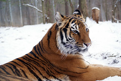 2014-01-29 Snow Camilla (102)