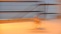 speedy dog (asimmetrica) Tags: