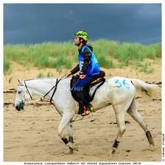 36 Rodrigo MOREIRA BARRETO (BRA) riding LYAD EL EMIR, Dragey Beach, Endurance competition of the Alltech FEI World Equestrian Games 2014 in Normandy (Olivier PRIEUR) Tags: horses horse mer beach landscape cheval normandie jem paysage endurance plage chevaux dragey