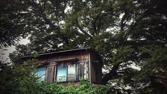 Is this Tree House? The answer is no. (20EURO) Tags: house mobile vintage wooden ruins sony traditional treehouse oldhouse 木 自然 家 携帯カメラ 昭和 三田 樹木 hugetree 廃墟 privatehouse 大木 woodenconstruction 古い 古民家 居住 ツリーハウス xperia sonyso01f