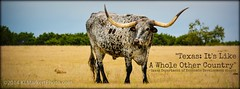 Texas Other Country FB Cover (KLMP) Tags: ranch usa animals other buffalo texas cattle cove tx country peacock deer whole exotic camel goats cover zebra facebook copperascove topsey copperas