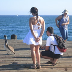 Look!  A Pelican!... (Viejito) Tags: ocean california camera wood woman usa white man feet beach girl hat sunglasses santabarbara lady sailboat america canon hair square geotagged pier back américa shoes photographer waterfront dress unitedstates arms pacific legs skin wind sandals bare young tan band pelican rubber powershot jeans pacificocean thong footwear pelikan shoulders brunette amerika oiseau brownpelican vogel braid monopod webbed pelikaan s100 stearnswharf amérique occidentalis californicus pelecanus diaphanous 500x500 pelecanusoccidentaliscalifornicus canons100 שקנאי pelícanopardo geo:lat=34408591 geo:lon=119685015 johnpeckstearns πελεκάνοσ البجعطائر selfiestick