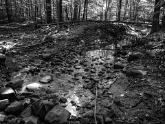 P9190183.jpg (mtfbwy) Tags: bw bradley cleveland landscape metropark reservation northolmsted ohio unitedstates