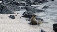 Galapagos - San Cristobal-22
