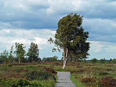 """Ballade dans la """"Brackvenn"""" (Ld\/) Tags: panorama nature beauty eau belgium belgique belgie plan promenade paysage venn fort hautes fagnes panoramique hautesfagnes glacire eupen hohes waimes botrange tourbes brackvenn tourbires brackven"""