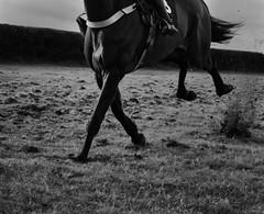 Gallop (tom ballard2009) Tags: dorset milbornestandrew southdorsethunt horse pointing racing sport gallop mono blackwhite