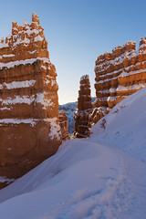In the depth of winter I finally learned that there was in me an invincible summer… (ferpectshotz) Tags: brycecanyon hoodoos southwesternutah utah canyon snow winter cold morning bluesky