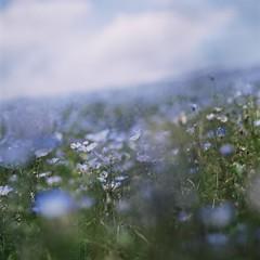 (-NR-) Tags: film fujicolorpro400 zenzabronicas2