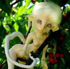 Lemmiwings (Chinatsu_1) Tags: nature garden rat doll fantasy tiny bjd artistdoll ebjd anthrodolls limedolls