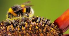 summer-buzz