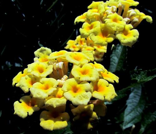 29 Flower Harkers Island NC NC  9723