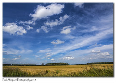 Lincolnshire Summer (Paul Simpson Photography) Tags: summer nature field clouds rural corn wheat bluesky farmland lincolnshire crop naturalworld photosof imageof vastexpanse sonya77 paulsimpsonphotography july2014