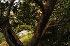 Alberi (Laralucy) Tags: italy alberi ngc natura sicily sicilia topshots pantalica theoriginalgoldseal