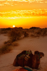 Sahara sunrise (Klas-Herman Lundgren) Tags: orange sahara nature colors animals sunrise desert time northafrica tunisia camel tunisien soluppgng ken