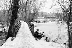 Bridge (OmegaMoth) Tags: city bridge trees winter urban blackandwhite bw snow monochrome nova architecture forest virginia blackwhite nikon february dslr northernvirginia 2014 theodorerooseveltisland d7000 nikond7000 sugarcrashphotography