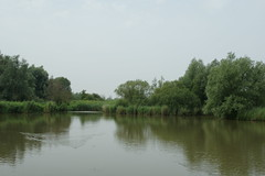 DSC06472 (Ton Smilde) Tags: oostvaardersplassen naturereserveinthenetherlands