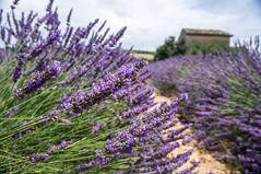 _DSC3108.jpg (StuBearPhotos) Tags: summer paris france lila provence