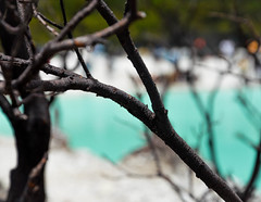 DSC_0119-2 (ajinurvita) Tags: bandung alam danau wisata kawahputih belerang
