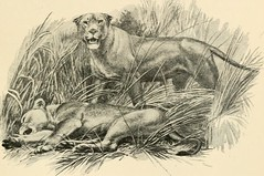"Image from page 72 of ""On safari : big game hunting in British East Africa, with studies in bird-life"" (1908)"