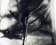 drowning jar (amy buxton) Tags: wild summer plants nature strange dark photography mono weird scary photographer darkness natural stlouis dream surreal creepy depression disturbing dreamlike depressing amybuxton