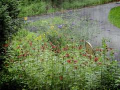 8.16.14: Where the Hummingbirds Gather (Ruff Edge Design) Tags: flowers screen cropped fibers colorburn kimklassenwaterfronttexture
