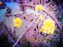 September (Rody M) Tags: life morning autumn flower september monday