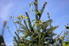 Flowers (heeygloria) Tags: travel canada tourism nature animals outdoors photography zoo winnipeg wildlife manitoba assiniboinepark assiniboineparkzoo