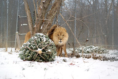 2014-01-29 Roman Snow (253)