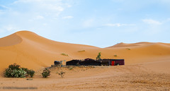 Oasis 2 (Houssam Alami) Tags: trip travel vacation sahara colors beauty sand desert adventure camel morocco oriental orient gorges sandhill dades ouarzazat marzouga toudra