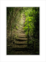 Bamboo and Green. (Mikec77) Tags: green bamboo footpath