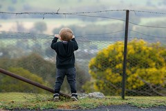 I can't see... (D J Millard) Tags: boy fence toddler looking son lookout zachary
