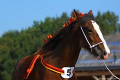 IMG_3959-k (Mandy Bramavi) Tags: show horse shire