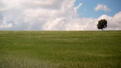 SURVIVOR (Fabio Petry) Tags: blue sky tree green skyline clouds skyscape minimalism minimalismo