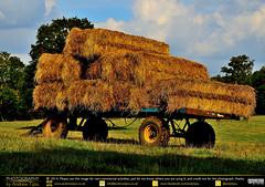 Hay Trailer (andrewtijou) Tags: uk england rural europe unitedkingdom farming surrey hay dorking northdowns surreyhills nikond7000 andrewtijou