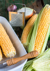 raw corn on the cob to cook bake,vertically (harmonyandtaste) Tags: summer food plant green nature field yellow closeup garden golden healthy corn holding hands raw hand natural sweet farm background grain harvest ears vegetable fresh health crop produce farmer organic agriculture cob maize sweetcorn kernels ripe corncob nutrition nutritious ingredient shuck