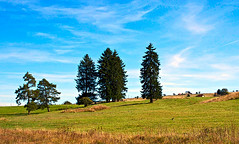 Highlands trees (mares816) Tags: trees sky mountains green nature grass clouds zeiss landscapes highlands meadows hills sonynex planar3218touit