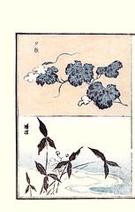 Top – bottle gourd; Bottom – Chinese arrowhead (Japanese Flower and Bird Art) Tags: flower bottle gourd lagenaria siceraria cucurbitaceae chinese arrowhead sagittaria trifolia alismataceae hokkei totoya ukiyo woodblock picture book japan japanese art readercollection
