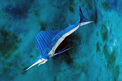 Dolphinitely Some of the Best Origami Sea Creatures I've Seen! (Origami.me) Tags: origami fish sailfish papercraft paper craft diy fold folding
