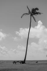 Palm Tree on the Beach, Kauai, Hawaii, USA (takasphoto.com) Tags: 80400mmf4556dvr afvrzoomnikkor80400mmf4556ded america arena bw beach black blackwhite blackandwhite blancoynegro bãibiển coast coastal cobblestones color d610 eeuu estadosunidos fullframe grava gravel greenplants hawaii island kauai kauaʻi kingdomplantae landform lens mar mare mer monochrome nature nikkor nikkor80400mm nikkor80400mmf4556dafvred nikkorlens nikon nikond610 noiretblanc northamerica ocean oceansea oceanea oceano outdoor pacific pacificocean palm palmtree palmtrees pebbles plage plantae playa plaża poipubeach poipubeachpark polynesia 自然 黑白 해변 砂浜 米国 美国 灘 白黒 白黒写真 植物 椰子 海 海岸