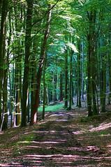Jasmund National Park Beech Forest (Felicia Brenning) Tags: jasmund national park beech forest woods trees nature colors summer sun light sunlight rügen germany sony