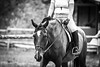 Horse Show (JustJamieLeigh) Tags: horse horses equine equines pony ponies show english riding horseback competition equestrian monochrome blackandwhite horsebackriding englishriding horseshow canon 60d canon60d