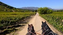 Video: Montes Vinyard Tour via Horse-drawn covered wagon (Renée S. Suen) Tags: video montes chile april2017 horse tour view vineyard grapevine grapes scenery