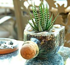 Planter-Glass Bottle_alternativeconsumer_com (DougBittinger) Tags:
