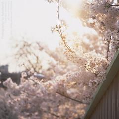 * Untitled... (DAAutoManiA) Tags: rollei rolleiflex fuji velvia epson fujifilm fujichrome planar velvia50 carlzeiss 75mm typeii 35f rvp50 silverfast rolleiflex35f