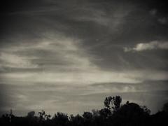Quiet is the Sky (Immortal Zoddo) Tags: trees light shadow sky blackandwhite bw white black blur clouds soft solitude waves gloomy darkness fuzzy grain blurred bleak gloom grainy desolate fuzz desolation obscure