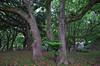 """名護屋城10 • <a style=""""font-size:0.8em;"""" href=""""http://www.flickr.com/photos/89606208@N07/14247496400/"""" target=""""_blank"""">View on Flickr</a>"""
