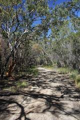 Brisbane Water National Park (cathm2) Tags: travel trees nature walking nationalpark hiking australia nsw centralcoast brisbanewater greatnorthwalk